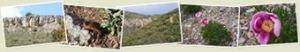 Ver 20090419 Ruta al Castillejo de Villarta de los Montes. Siberia de Extremadura