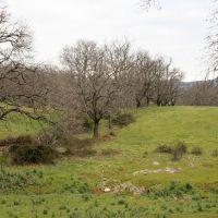 20070408 Roble de la Nava. Berzocana. Arbol Singular de Extremadura