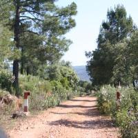 20090507 Ruta del Mirador al Área Recreativa del Sotillo. Reserva de Caza de Cijara. Siberia de Extremadura