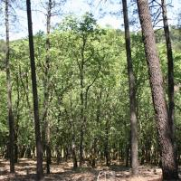 20090507 Ruta al Área Recreativa de la Muela. Reserva de Cijara. Siberia de Extremadura