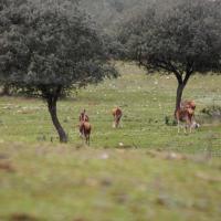 20100226 Ruta al Mirador de la Fresneda. Parque Nacional de Monfragüe. Extremadura