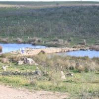 20100131 Ruta por el Embalse de Talaván. Tierras de Monfragüe. Extremadura