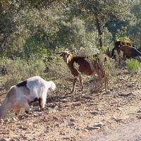 20051212 Ruta por la Pedanía de La Calera en Alía. Villuercas Ibores, Jara. Extremadura