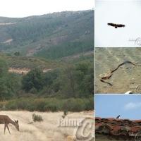 Fauna en el Geoparque de Las Villuercas, Ibores y Jara