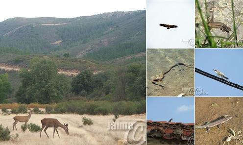 Ver Fauna en el Geoparque de Las Villuercas, Ibores y Jara