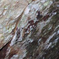20120117 Ruta por Fósiles y Pinturas Rupestres del Castillo de Herrera del Duque. Siberia de Extremadura.