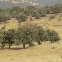 20120602 Ruta a las Trincheras de la Guerra Civil en el Monte Valmorisco de Alía. Villuercas Ibores Jara. Extremadura