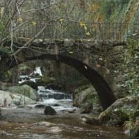 20121125 Ruta Otoño en la Piscina Natural de Casas del Monte. Valle del Ambroz. Extremadura