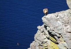 Buitre-observando-Golondrin